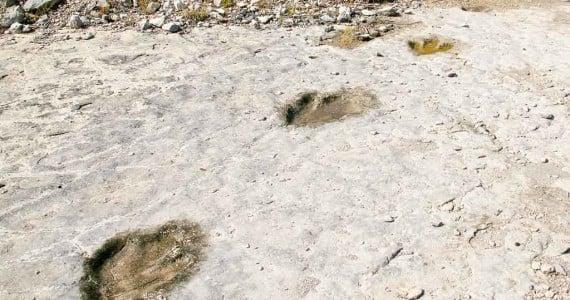 trex tracks in riverbed