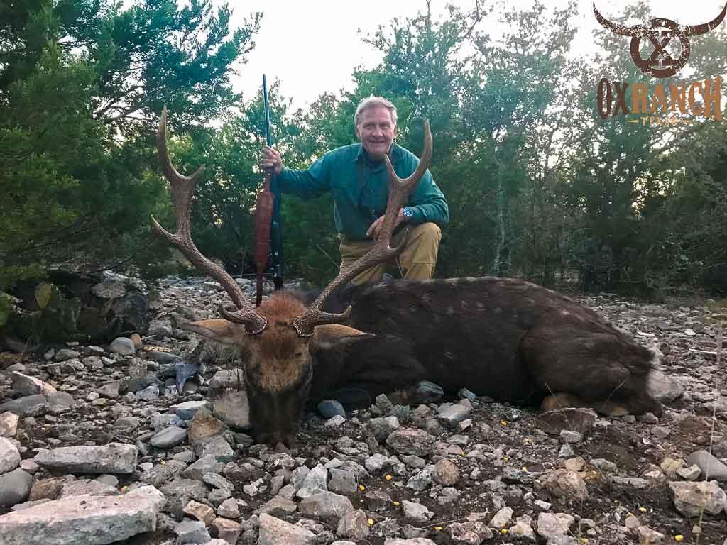 Sika Deer Hunting | 18,000 Acres in Texas | 60+ Species Ox Ranch