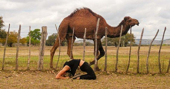 yoga camel pose next to camel