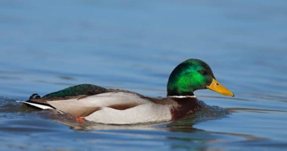 Duck hunts in Texas