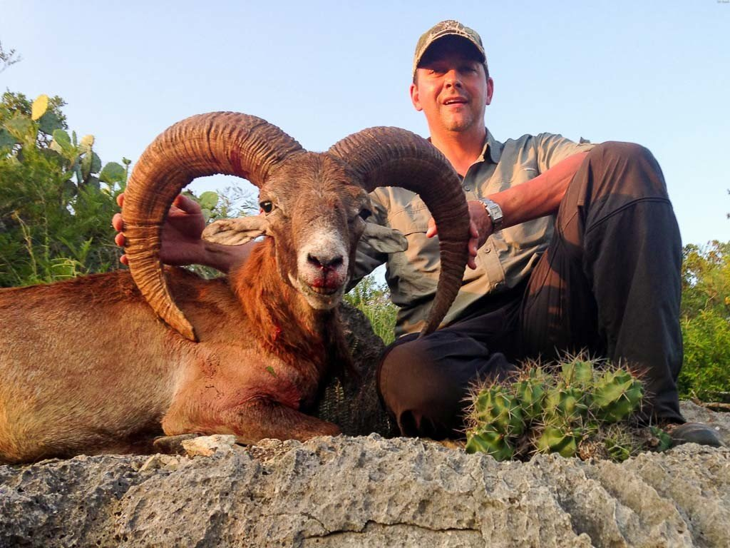 red sheep hunting 18000 acres in texas 60 species