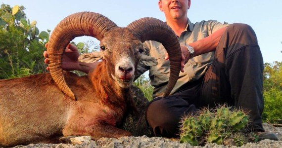 red sheep exotics hunting