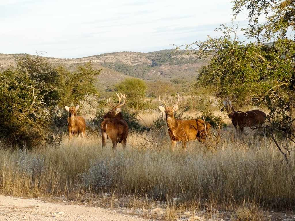 Ox Ranch | Just Plain Hunting
