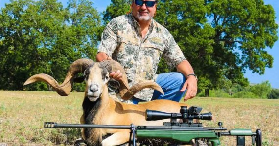 texas corsican sheep hunts