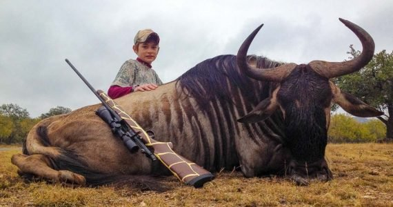 wildebeest hunting