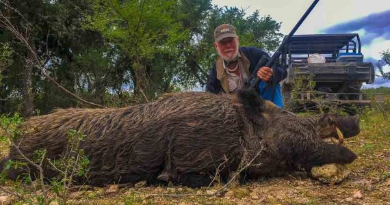 hog hunting texas