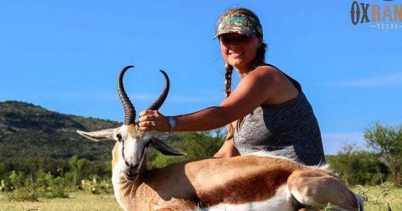 springbok hunting