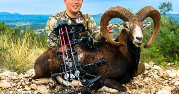 bow hunting mouflon