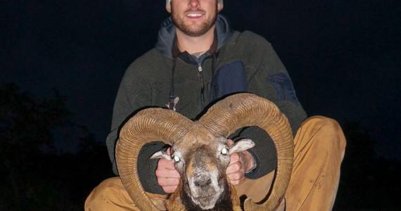 mouflon hunts