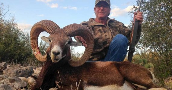 mouflon sheep hunting