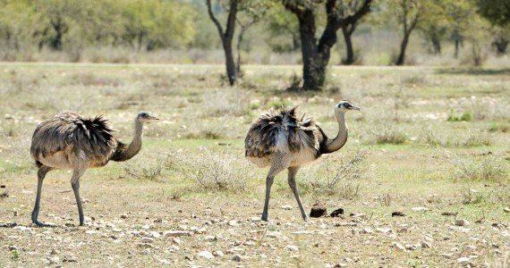 rhea hunts