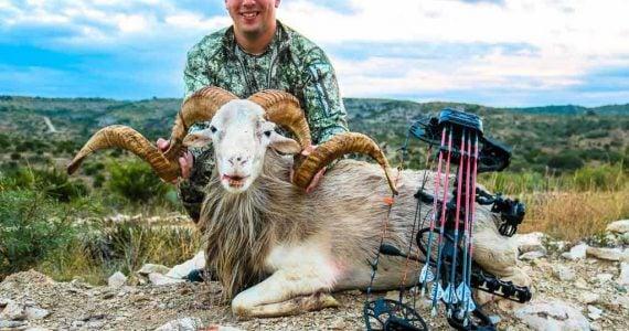 Texas Dall bow hunting