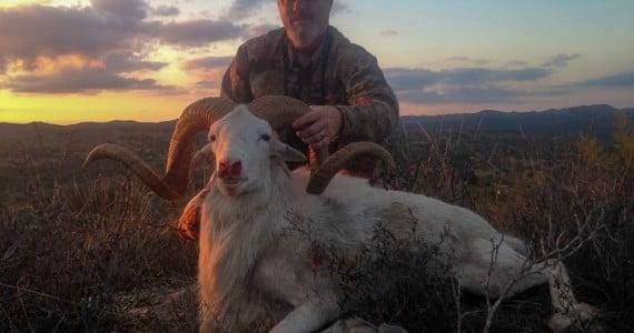 Texas dall sheep hunting