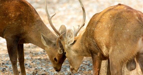 eld's deer hunts