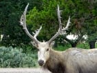 pere david hunting