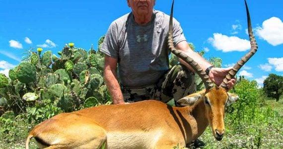 impala hunting